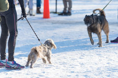 Σκυλιά στο χιόνι Στοκ εικόνα με δικαίωμα ελεύθερης χρήσης
