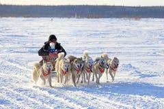 Σκυλιά σχεδίων Στοκ εικόνες με δικαίωμα ελεύθερης χρήσης