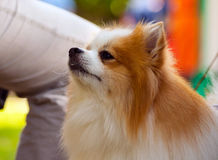 Σκυλιά των διάφορων φυλών Στοκ Εικόνα
