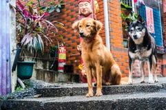 Σκυλιά φρουράς Στοκ εικόνες με δικαίωμα ελεύθερης χρήσης