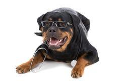 σκυλιά Στοκ Φωτογραφίες