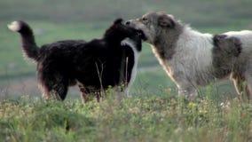 σκυλιά απόθεμα βίντεο