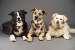 3 σκυλιά στοκ εικόνα