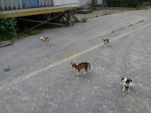 2 σκυλιά στοκ φωτογραφία με δικαίωμα ελεύθερης χρήσης