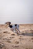 σκυλιά Στοκ Φωτογραφία