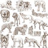 Σκυλιά (Canidae) απεικόνιση αποθεμάτων
