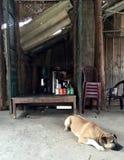 Σκυλιών έξω από ένα παραδοσιακό Mum και ένα λαϊκό κατάστημα στο χωριό του Βιετνάμ Στοκ εικόνες με δικαίωμα ελεύθερης χρήσης