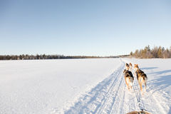 Σκυλιών στο Lapland Στοκ Εικόνα