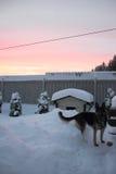 Σκυλόσπιτο, σκυλί και χειμερινό ηλιοβασίλεμα Στοκ φωτογραφία με δικαίωμα ελεύθερης χρήσης