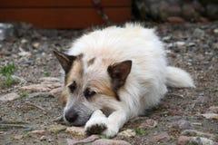 σκυλόσπιτο Στοκ φωτογραφίες με δικαίωμα ελεύθερης χρήσης