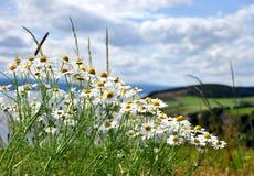 Σκωτία wilds Στοκ Εικόνες