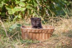 Σκωτσέζικα καθίσματα γατακιών πτυχών νέα Στοκ Εικόνες
