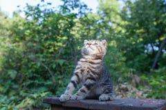 Σκωτσέζικα καθίσματα γατακιών πτυχών νέα Στοκ φωτογραφίες με δικαίωμα ελεύθερης χρήσης