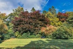 Σκωτσέζικοι πάγκοι δέντρων σημύδων και σκιά φθινοπώρου στην όμορφη πόλη Crieffs Στοκ εικόνες με δικαίωμα ελεύθερης χρήσης