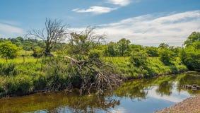 Σκωτσέζικο έγκαυμα και ένα πεσμένο δέντρο στοκ εικόνες