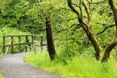 Σκωτσέζικο μονοπάτι του Forrest που οδηγεί πέρα από μια γέφυρα με καλυμμένα τα βρύο δέντρα στοκ εικόνα