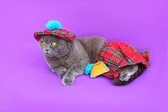 Σκωτσέζικο σκωτσέζικο φόρεμα γατών πτυχών Στοκ Φωτογραφία