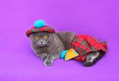 Σκωτσέζικο σκωτσέζικο φόρεμα γατών πτυχών Στοκ Εικόνες