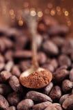 Σκόνη κακάου με τη ζάχαρη στο κουτάλι στο ψημένο κακάο Στοκ φωτογραφίες με δικαίωμα ελεύθερης χρήσης
