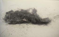 Σκόνη σπιτιών Στοκ Εικόνες
