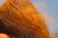 Σκόνη χρώματος στην τρίχα μιας γυναίκας Στοκ φωτογραφία με δικαίωμα ελεύθερης χρήσης