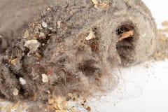 σκόνη Στοκ φωτογραφίες με δικαίωμα ελεύθερης χρήσης