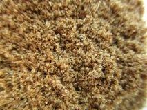 Σκόνη masala κύμινου Στοκ φωτογραφία με δικαίωμα ελεύθερης χρήσης