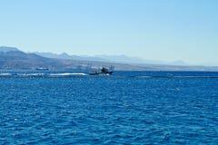 Σκόπελος δελφινιών στη Ερυθρά Θάλασσα στοκ εικόνες με δικαίωμα ελεύθερης χρήσης