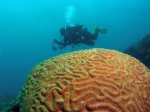 σκόπελος δυτών κοραλλιών Στοκ Εικόνα