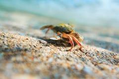 Σκόπελος θάλασσας ομορφιάς και άμμος θάλασσας Στοκ εικόνα με δικαίωμα ελεύθερης χρήσης