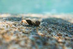 Σκόπελος θάλασσας ομορφιάς και άμμος θάλασσας Στοκ φωτογραφίες με δικαίωμα ελεύθερης χρήσης
