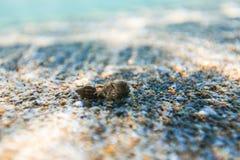 Σκόπελος θάλασσας ομορφιάς και άμμος θάλασσας Στοκ Φωτογραφία