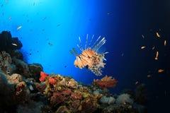 σκόπελος κοραλλιών lionfish στοκ εικόνα