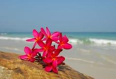 σκόπελος λουλουδιών Στοκ Φωτογραφίες
