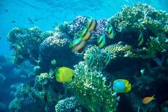 Σκόπελος με ποικίλα σκληρά και μαλακά κοράλλια και τροπικά ψάρια στοκ εικόνα