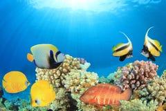 σκόπελος ψαριών κοραλλιών τροπικός Στοκ εικόνες με δικαίωμα ελεύθερης χρήσης