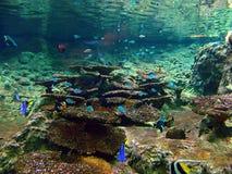 σκόπελος ψαριών κοραλλιών τροπικός Στοκ φωτογραφία με δικαίωμα ελεύθερης χρήσης