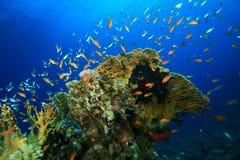 σκόπελος ψαριών κοραλλιών Στοκ φωτογραφία με δικαίωμα ελεύθερης χρήσης