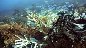 σκόπελος ψαριών κοραλλ&io Φιλιππίνες Στοκ εικόνες με δικαίωμα ελεύθερης χρήσης