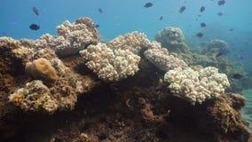 σκόπελος ψαριών κοραλλ&io Φιλιππίνες Στοκ Εικόνα