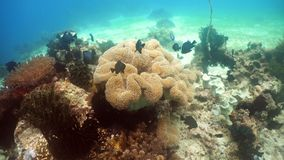 σκόπελος ψαριών κοραλλ&io Φιλιππίνες Στοκ εικόνα με δικαίωμα ελεύθερης χρήσης