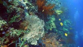 σκόπελος ψαριών κοραλλ&io Φιλιππίνες Στοκ φωτογραφία με δικαίωμα ελεύθερης χρήσης