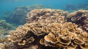 σκόπελος ψαριών κοραλλ&io Φιλιππίνες Στοκ Φωτογραφίες