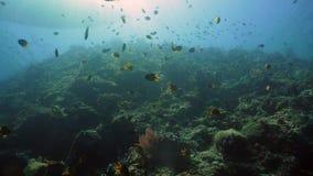 σκόπελος ψαριών κοραλλ&io Φιλιππίνες Στοκ Φωτογραφία