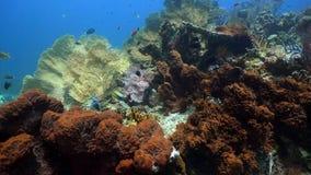 σκόπελος ψαριών κοραλλ&io Φιλιππίνες Στοκ Εικόνες
