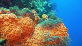 σκόπελος ψαριών κοραλλ&io Φιλιππίνες Στοκ φωτογραφίες με δικαίωμα ελεύθερης χρήσης