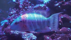 σκόπελος ψαριών κοραλλ&io Στοκ εικόνες με δικαίωμα ελεύθερης χρήσης