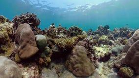 σκόπελος ψαριών κοραλλ&io φιλμ μικρού μήκους