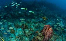 σκόπελος ψαριών σύνθεση&sigmaf Στοκ φωτογραφία με δικαίωμα ελεύθερης χρήσης
