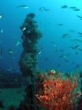 σκόπελος ψαριών Στοκ φωτογραφία με δικαίωμα ελεύθερης χρήσης